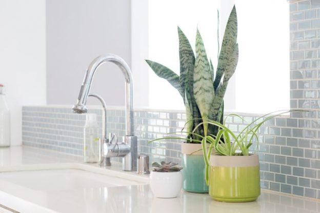 استفاده از گلدان در آشپزخانه