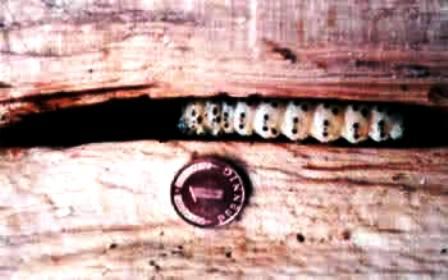 افات چوب , مورچه , موریانه , سوسک چوبخوار