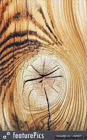 سه نوع اصلی چوب چیست؟ چوب نرم, چوب سخت , چوب مهندسی