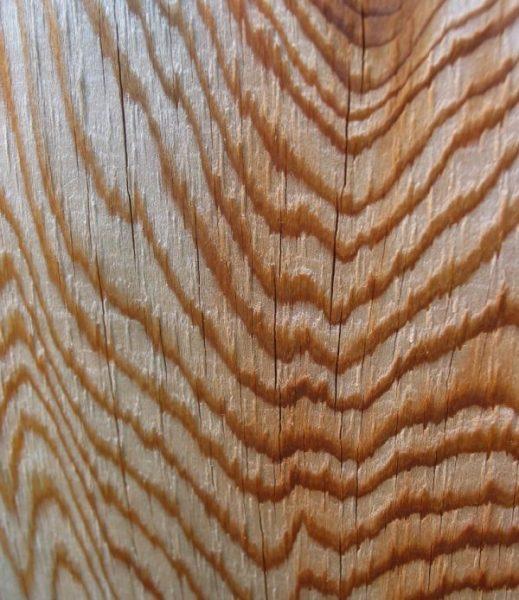 انواع چوب محبوب سدر