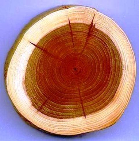 انواع چوب و روکش چوب طبیعی در دکوراسیون چوبی  (14)
