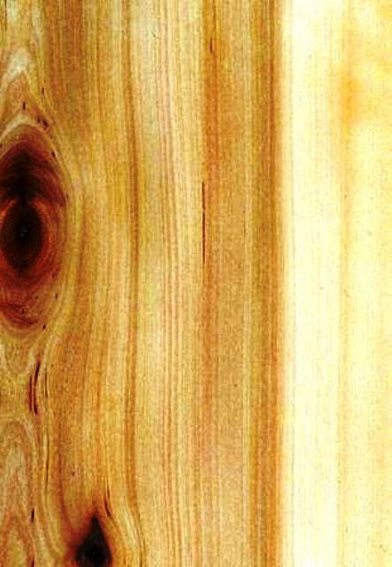 انواع چوب و روکش چوب طبیعی در دکوراسیون چوبی  (16)