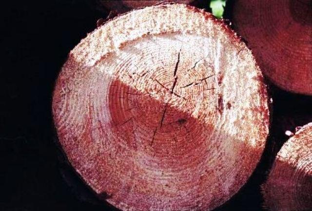 انواع چوب و روکش چوب طبیعی در دکوراسیون چوبی  (3)