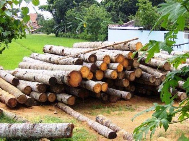 انواع چوب و روکش چوب طبیعی در دکوراسیون چوبی  (4)