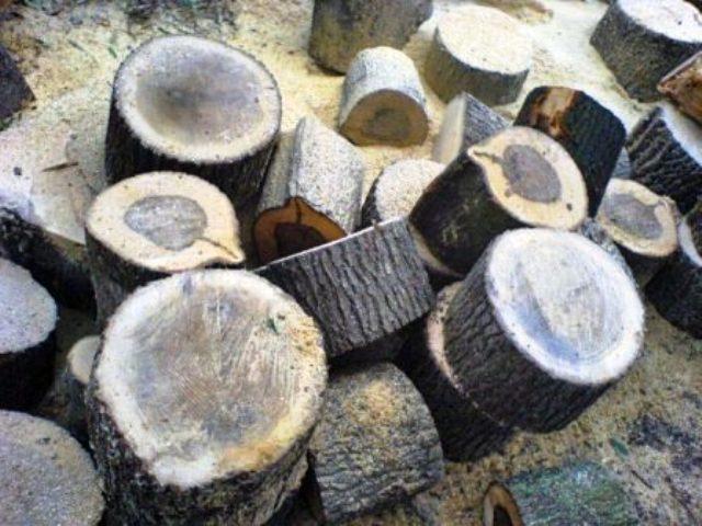 انواع چوب و روکش چوب طبیعی در دکوراسیون چوبی  (6)
