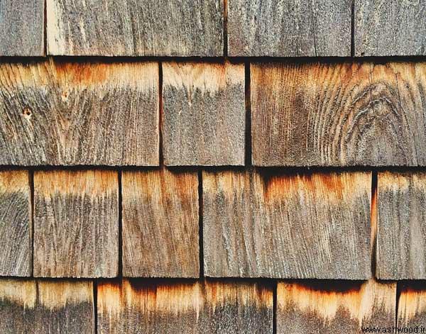 انواع مختلف چوب و کاربرد آن ها