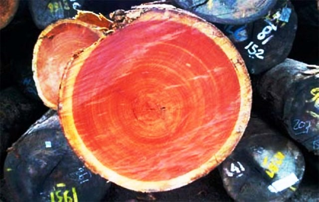 Kempas چوب گیلاس سخت ,مناسب کفپوش , چوب بادوام