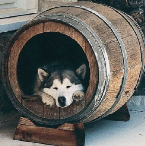 خانه سگ ساخته شده از بشکه چوبی