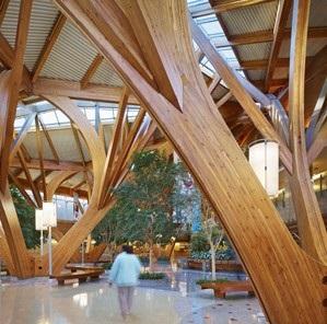 تاثیر چوب در سلامتی انسان