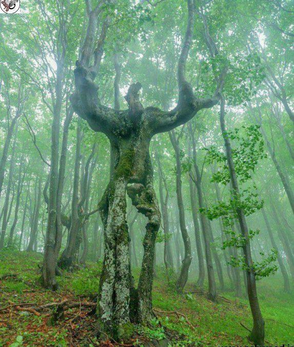 تعریف درخت