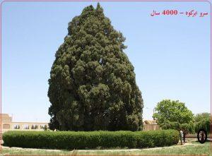سرو چهار هزار ساله ابرکوه استان یزد ایران زمین