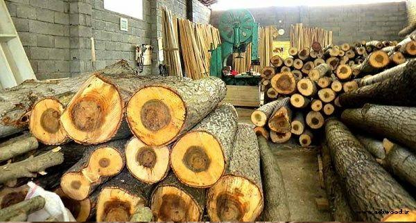 چوب درخت گردو