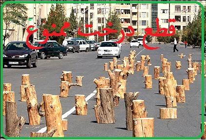 قطع درخت ممنوع