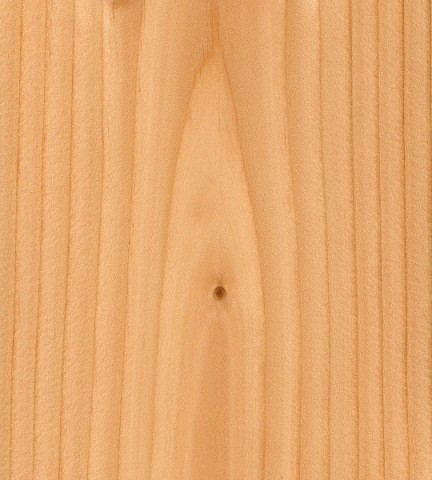 چوب صنوبر داگلاس