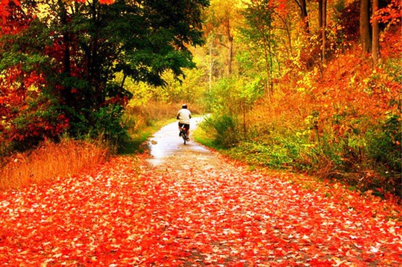 عکس های زیبای فصل پاییز
