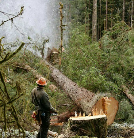 قیمت چوب در بازار چوب ایران , قیمت چوب تهران