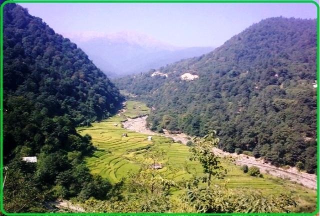 جنگلهای مازندران - مناطق جنگلی به دلیل فراوانی درختان
