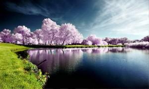 نمونه هایی خارق العاده و اعجاب برانگیز از عکاسی طبیعت