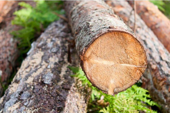 وزن کم ساختمان های چوبی