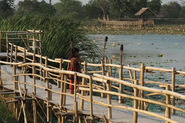 عکس پل چوبی ساخته شده روی مرداب