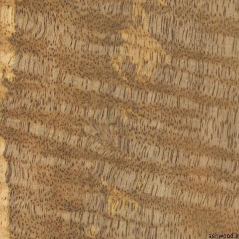 چوب انبه