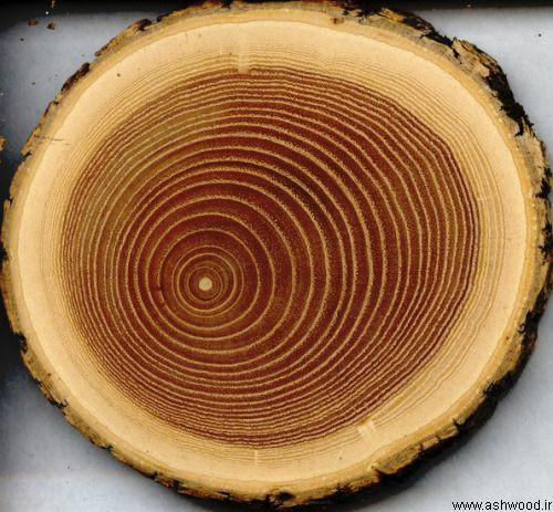 چوب بلوط قرمز , قیمت چوب بلوط
