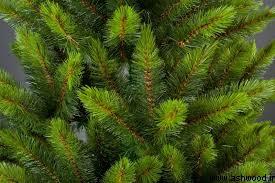 چوب یولکا, چوب نراد, معرفی تایگا جنگلهای صنعتی جهان, کاج روسی