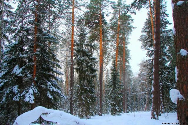چوب و جنگل در کشور روسیه