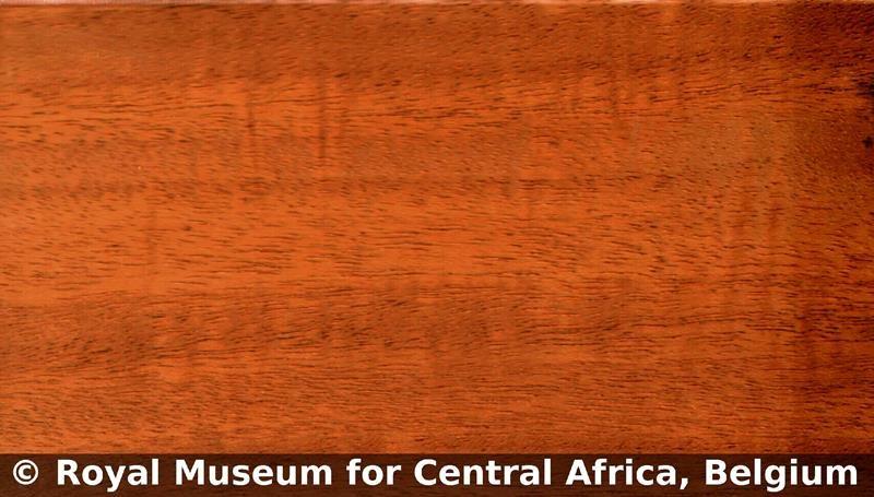 چوب ماهون افریقا , آکاژور ، ماهگونی , چوب افریقایی