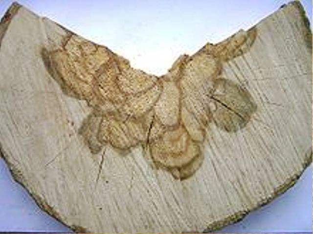 چوب ممرز