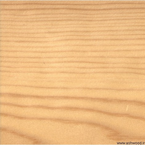 چوب کاج روسی , چوب نراد