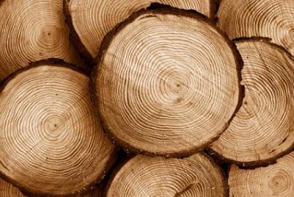 همه چیز درباره چوب کاج