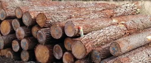 همه چیز درباره چوب کاج , تحقیق در مورد چوب , انواع چوب و کاربرد آنها