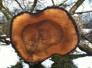 چوب درخت گردو, قیمت چوب درخت گردو انواع چوب گردو تشخیص چوب گردو