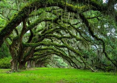 درختان عجیب و شگفت انگیز جهان