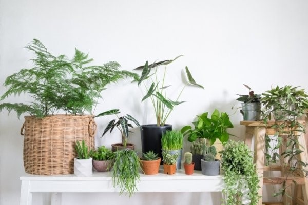 گیاهان برای طراحی خانه ای شاد
