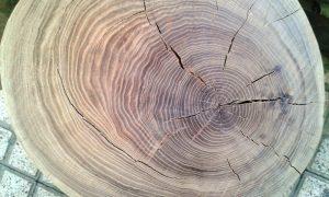 چوب و کنده درخت چنار در دکوراسیون داخلی