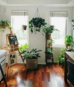 گل آپارتمانی در دکوراسیون خلاقانه