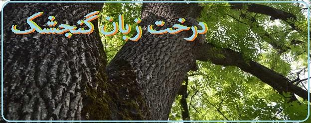 همه چیز درباره درخت زبان گنجشک و کاربردهای چوب آن