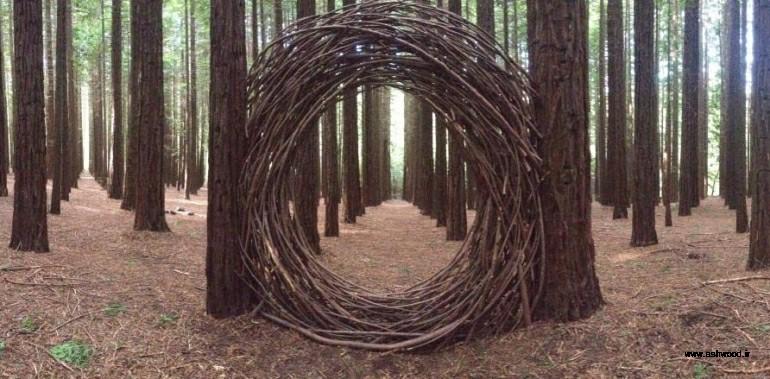 انواع درختان چوب سرخ