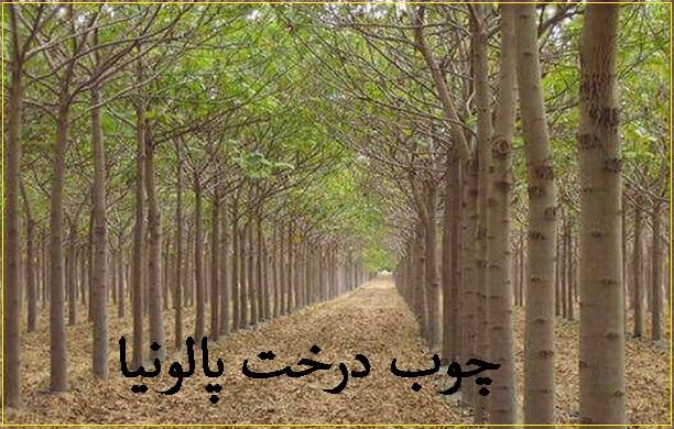 چوب درخت پالونیا