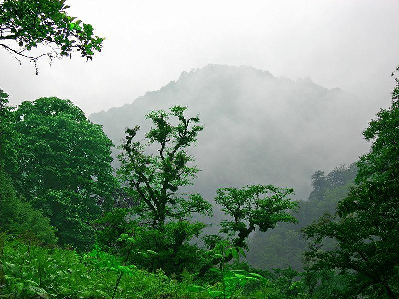 جنگل های هیرکانی , جنگل های شمال ایران