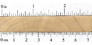 بافت مقطع چوب ممرز