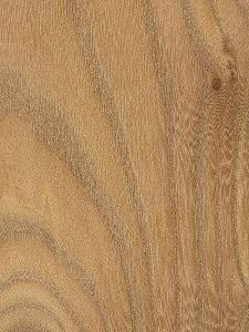 چوب ملچ قرمز آمریکایی