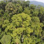 بزرگترین درخت جهان