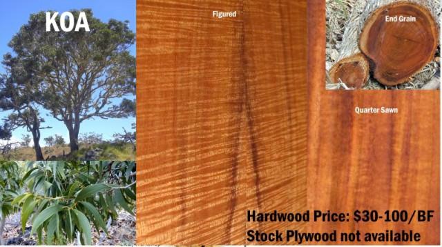 چوب کوا , اکاسیا هاوایی