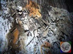 غار نمکی و ساحل نمکدان در جزیره قشم، عکس از آنوبانینی