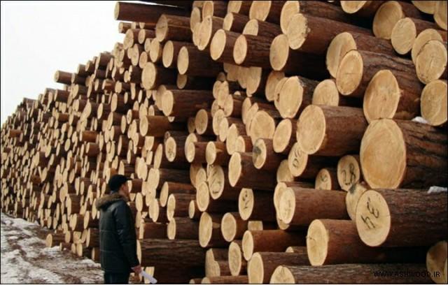 همه چیز درباره چوب روسی - کنده های ذخیره شده برای پردازش