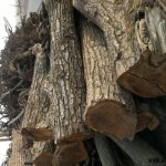 کنده درخت گردو , چوب اسلب , تخته و الوار چهارتراش , فروش چوب درخت گردو سفید و مشکی , فروش انواع چوبهای جنگلی به صورت چهار تراش,الوار
