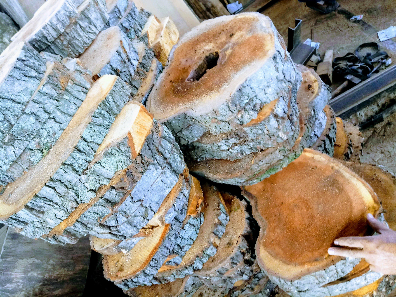 عکس روز، دربین تنه درختان توسکا
